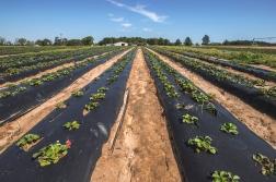 Rutland Farms-4.jpg